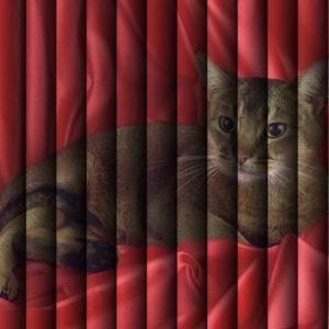 Фотожалюзи с рисунком кошки